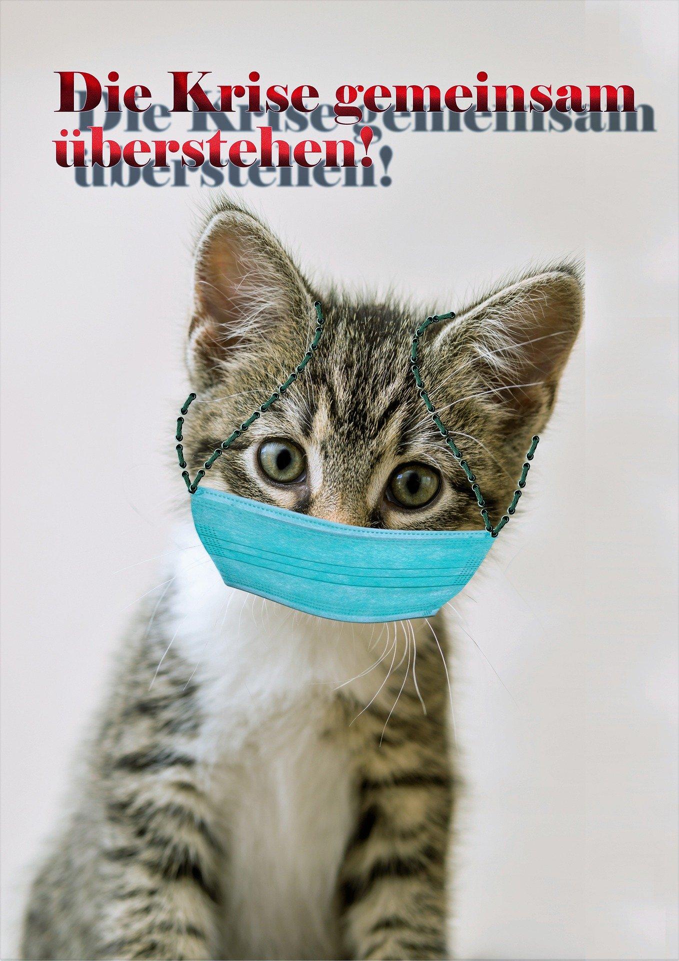 cat-4999508_1920